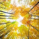 Fall foliage cropped